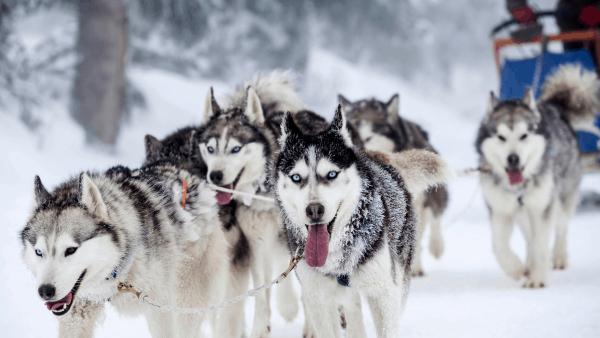 Inverno Val Di Susa